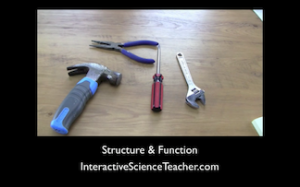 Science and demonstration- next time you're discussing how structure and function go together, bring in some tools for a perfect illustration of how each was made for a specific function.